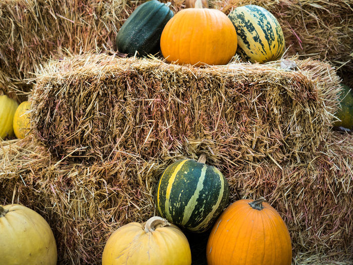 Close-up Day Food Food And Drink Freshness Fruit Gourd Halloween Hay Healthy Eating Jack O Lantern Multi Colored No People Outdoors Pumpkin Squash - Vegetable Vegetable