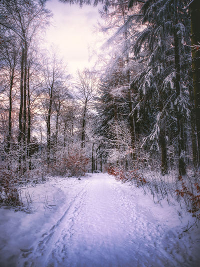 Snow Tree Cold Temperature Winter Plant Nature No People Beauty In Nature Bare Tree Tranquility Covering Scenics - Nature Land White Color Direction Tranquil Scene Road The Way Forward Day Outdoors