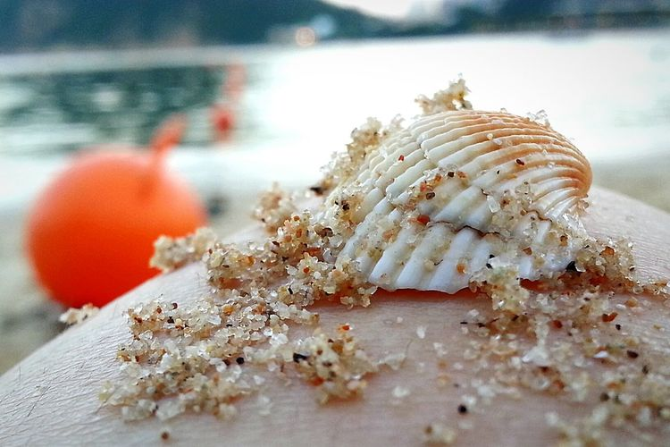 Check This Out Shell Beach Taking Photos Mobile Photography Eeyem New In Eeyem Close-up Shot Sand Macro