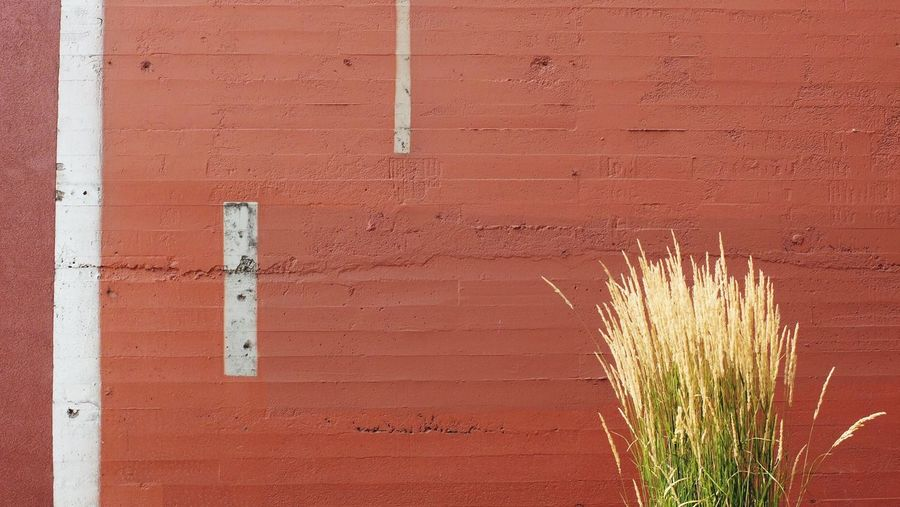 Close-up of red wall