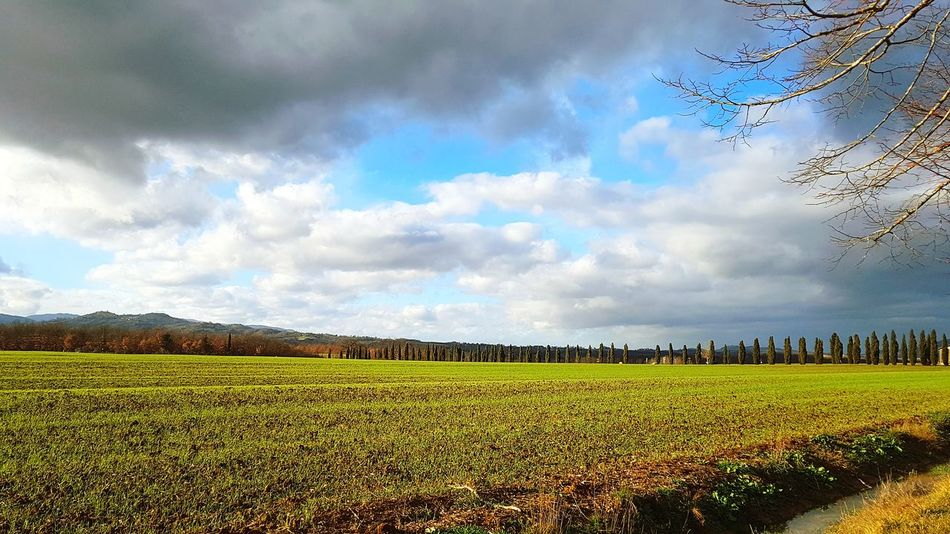 Dramatic Sky Nature Clouds And Sky Clouds Grey Trip Cloud - Sky Agriculture Field Nature Growth Rural Scene Crop  Sky Beauty In Nature Landscape Plant Day No People Outdoors Scenics Freshness Multi Colored