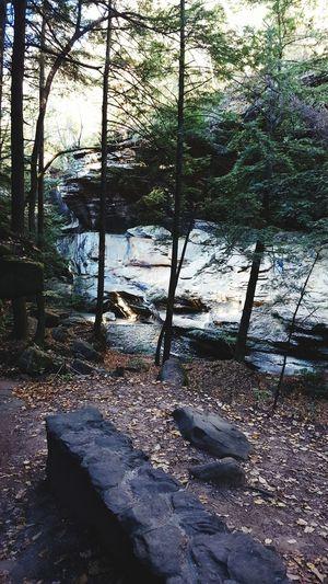 Woods hike