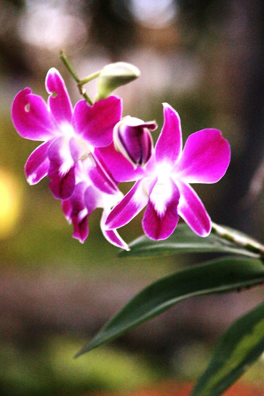 flower, growth, nature, plant, blooming, petal, beauty in nature, no people, fragility, outdoors, freshness, close-up, flower head, day