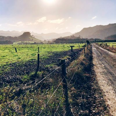 Secret Path Hiking Discover New Zealand Outdoors Agriculture Landscape Field Environment Nature Sky Growth