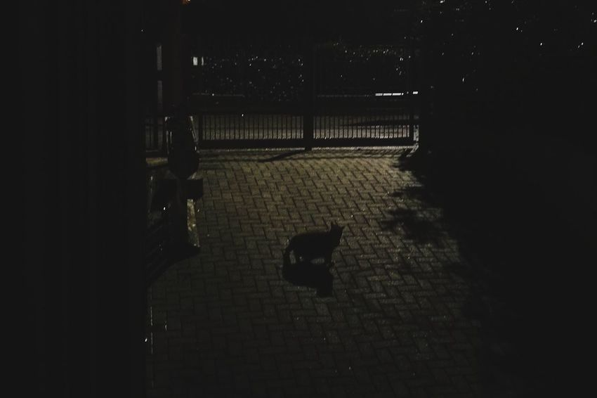Cat in front of a gate Photography EyeEmNewHere Colors Green Color Getty Images Getty X EyeEm Poster Street Streetphotography Street Photography Animal Shadow Shillouette Night Nightphotography Eyemphotography Getty+EyeEm Collection Shadow No People Day Outdoors