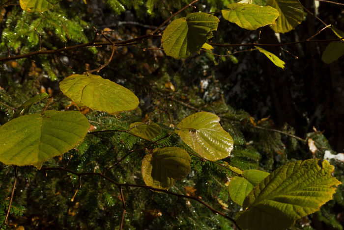 Wet Leaves Beauty In Nature Close-up Day Freshness Green Color Growth Landscape Leaf Leaves Nature No People Outdoors Pine Plant Tree Twig Twigs And Branches Wet Leaf Wet Leaves