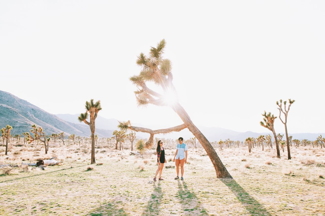 Man and woman standing by joshua tree on sunny day
