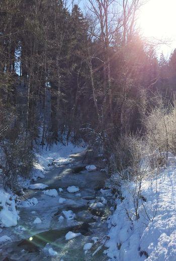Winter Wonderland Part II.