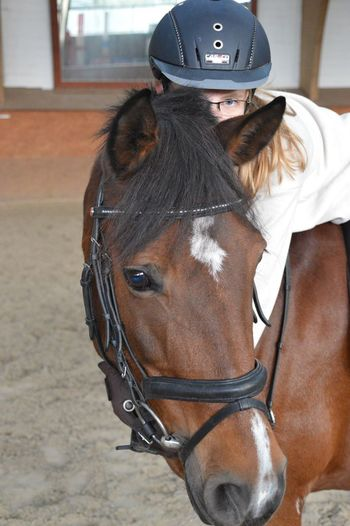 Horse Animal Themes One Animal Animal Head  Focus On Foreground Brown Animal Profile Nikon Nikonphotography Nikon D3200 Nikongirl Nikonphotographer Nikontop