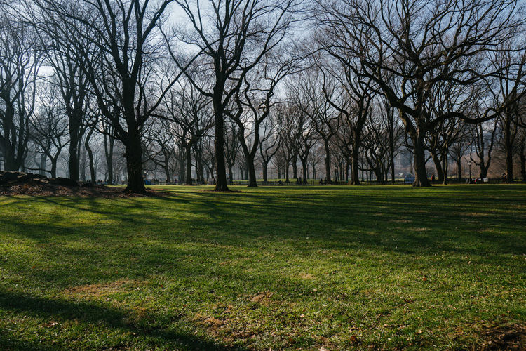 Central Park, January 2017 Central Park LEICA Q Manhattan New York City Bare Tree Beauty In Nature Day Field Grass Green Color Landscape Leicaq Nature No People Outdoors Scenics Tranquil Scene Tranquility Tree