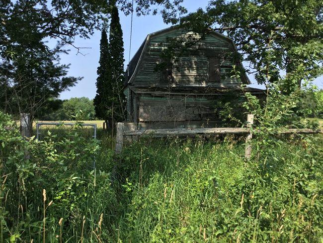 Abandoned in Houghton Lake bBuilt StructureoOutdoorswWood - MaterialaAbandonedhHouserRural ScenegGrassgGreen Color