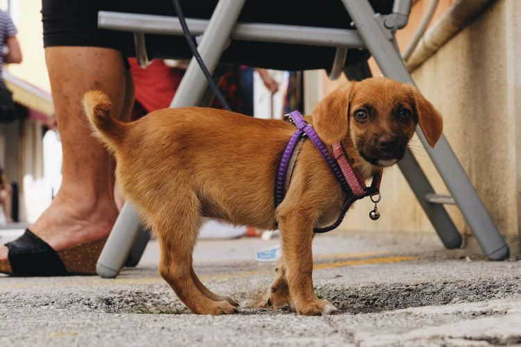 Day Dog Domestic Animals Human Body Part Low Section Mammal Men One Animal One Person Outdoors Pet Clothing Pets Real People