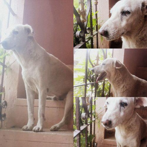 There are many innocent, abandoned stray dogs all over India! StrayDogsareCutetoo Showlove Give Home InnocentPuppies