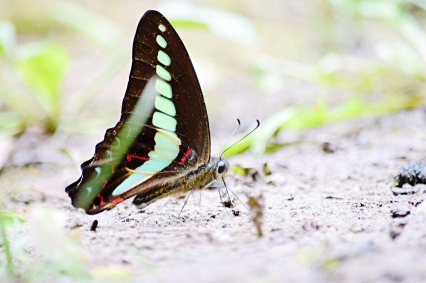 Long time no see EyeEm Gallery EyeEm Best Shots - Nature Nature EyeEm Nature Lover Macro Nature