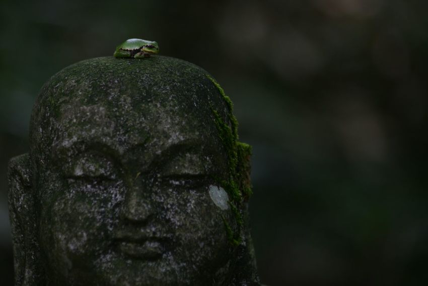 Quiet EyeEm Best Shots The Purist (no Edit, No Filter) EyeEm Best Shots - No Edit Buddha Temple Japan Frog Animals Peaceful Bokeh