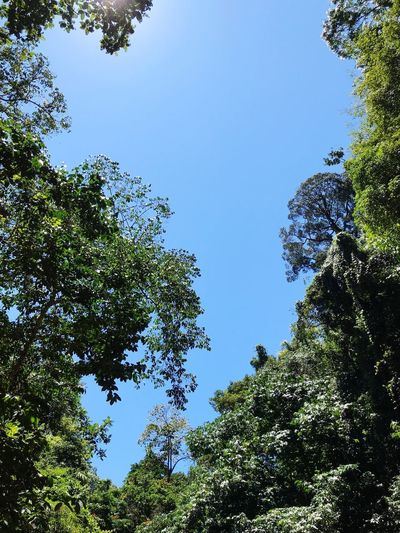 Green trees and blue sky Plant Tree Sky Low Angle View Growth Nature Beauty In Nature Branch Outdoors Tranquility Green Color Sunlight Scenics - Nature Forest Land No People Clear Sky Day Blue Leaf