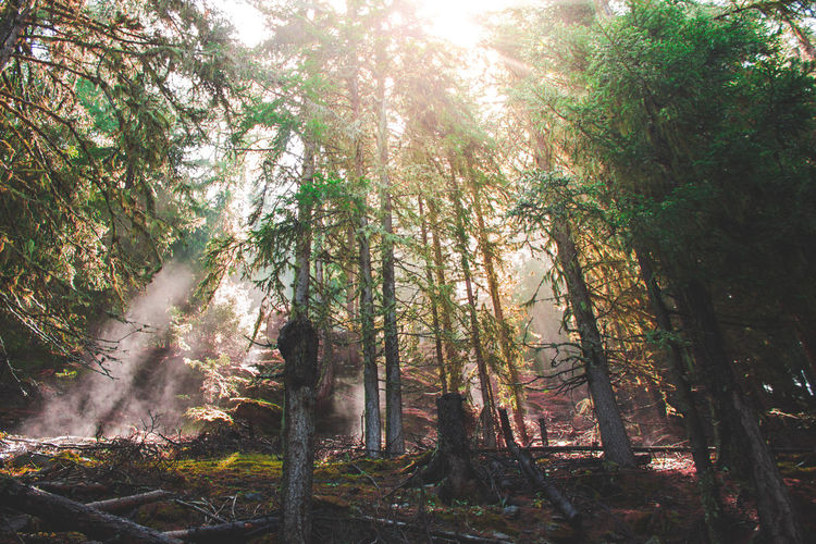 An illusion Hiking Into The Wild Nature Nature Photography Walking Around Forest Into The Woods Lens Flare Lensflare Nature_collection Switzerland Woods The Great Outdoors - 2018 EyeEm Awards