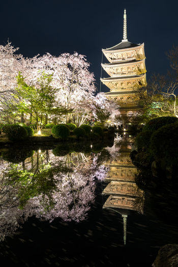 Trees Flowers Sakura Night Nightphotography Night Lights Reflections In The Water Lights Temple Architecture Japan Water