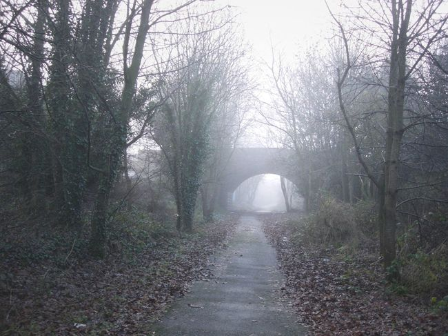 Beauty In Nature Day Fog Foggy Misty Nature No People Outdoors The Way Forward Tranquility Tree Unknown Journey