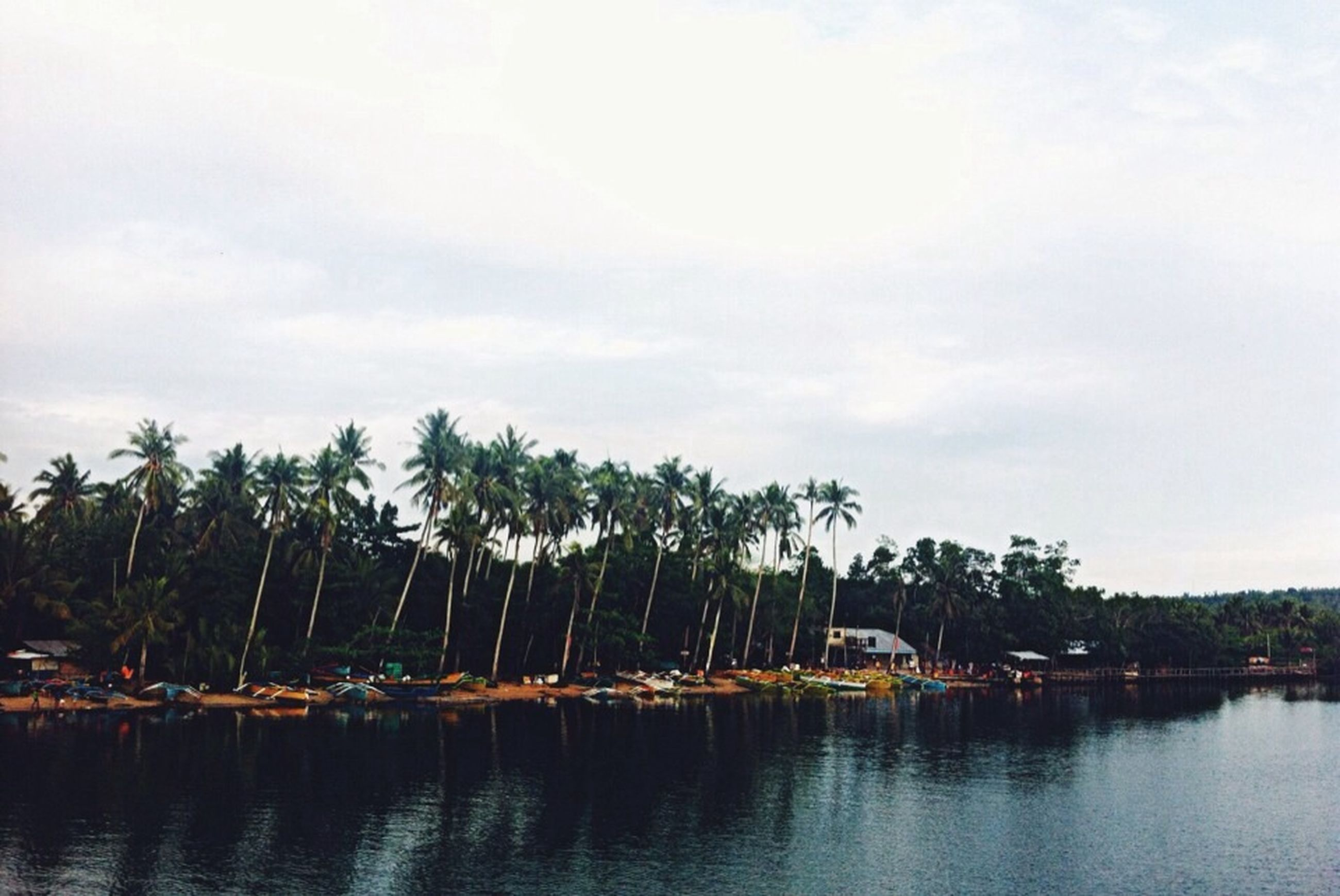 water, tree, sky, waterfront, nautical vessel, lake, transportation, boat, river, mode of transport, reflection, moored, tranquility, tranquil scene, cloud - sky, nature, built structure, palm tree, scenics, architecture