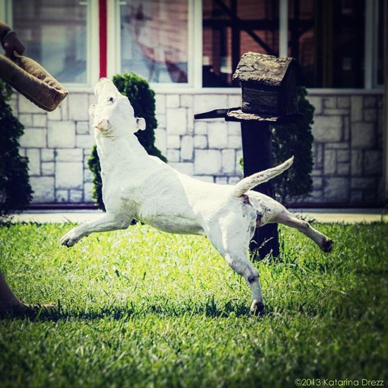 Having Fun with my crazy Bull Terrier baby ♡ ? My Dog Is Cooler Than Your Kid. ?