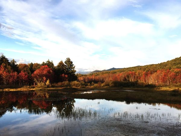 Whitemountains Indiansummer Autumn Tranquil Scene Tree Lake Reflection Water No People Outdoors Nature First Eyeem Photo