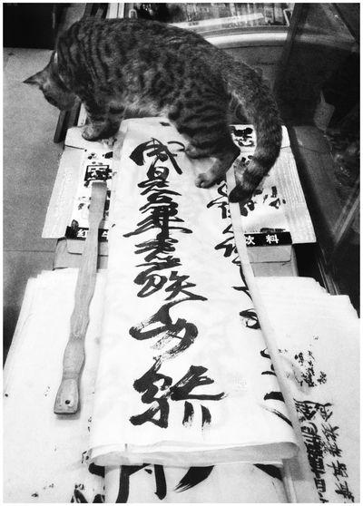 猫的汉子 Characters Cat кот 猫 汉子 Indoors  Creativity Communication Art And Craft Close-up
