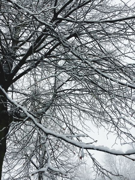 Winter Plant Branch No People Full Frame Winter Snow Cold Temperature Backgrounds Beauty In Nature Outdoors