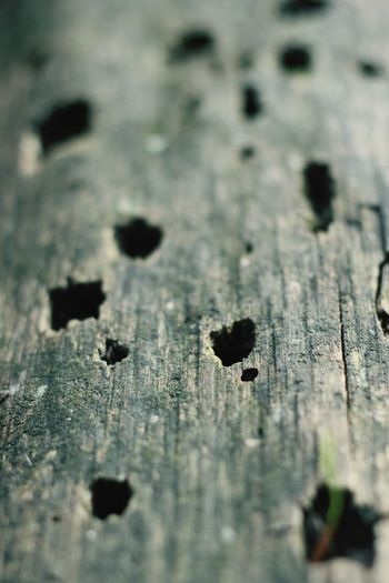Minimalism PhotographyEyeEm X WhiteWall: LandscapForestwalk ForestNature_collection Naturelovers Naturearoundus From My Point Of View Fotography Eyemphotography Taking Photos EyeEm Nature Lover Outdoor Photography 50mm F1.8 Wood 2016