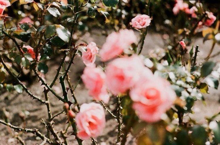 Flowerrrrs