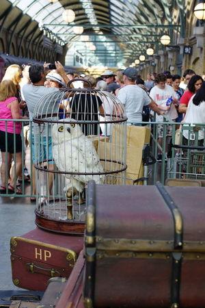 Universal Studios  Rail Transportation Orlando Florida Universal Studios  Harry Potter World Harry Potter Harrypotter Tourism Hedwig Owl Mail