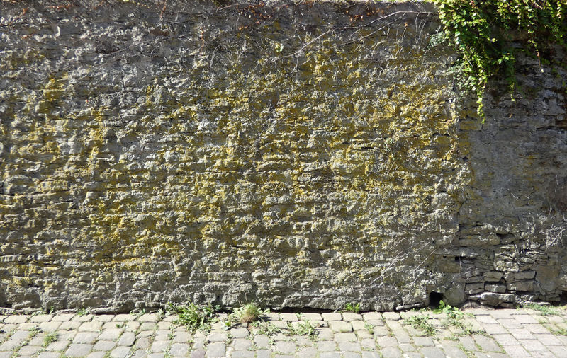 Plants growing on old wall