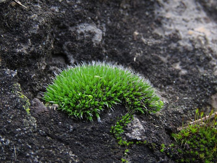 Growth Green Color Close-up Fragility Moss Nature Plant Growing Tree Trunk Freshness Botany Green Beauty In Nature Day Outdoors No People Focus On Foreground Full Frame Tranquility Uncultivated