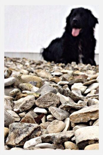 Favorite Art Dog Enjoying Life