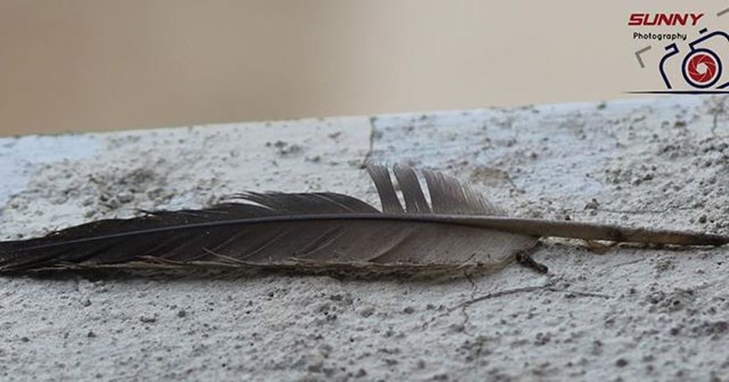 One frm my window Feather  Canon Sunny_Frames