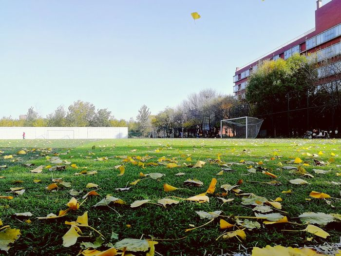 playground Soccer Green Color Outdoors Sky EyeEmNewHere