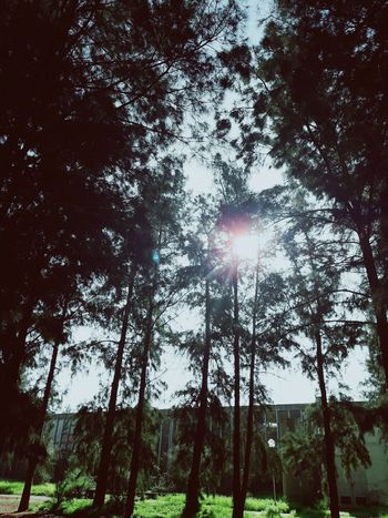 Usthb EyeEmNewHere Blue Sky Trees BTS Tree Low Angle View Nature Sky Sunlight No People Day Forest Beauty In Nature Outdoors