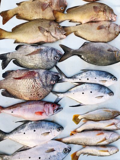 Full Frame Animal Vertebrate No People Backgrounds Seafood Still Life Fish Freshness Close-up Animal Themes Healthy Eating Wellbeing High Angle View