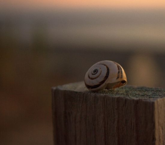 Canon Cool Community Photooftheday Picoftheday Photo Shots Vision Composition Shell Detail Vscogood Vscocam Dofaddicts Dof Photography Close-up Depth Of Field Nature Naturelovers Scatto Italy