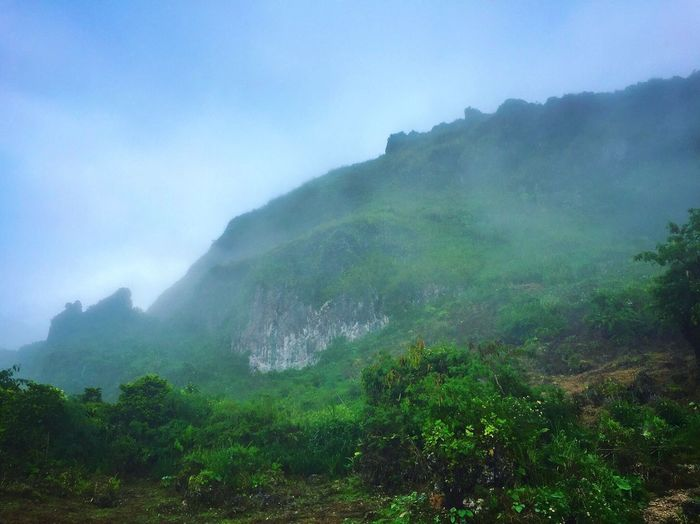 Mountain Nature Beauty In Nature Fog Scenics Landscape Outdoors Day Sky Tree Mountain Range Forest Cloud - Sky Tourism Travel Destinations Scenery Blue Sky Osmeña Peak Cebu City, Philippines
