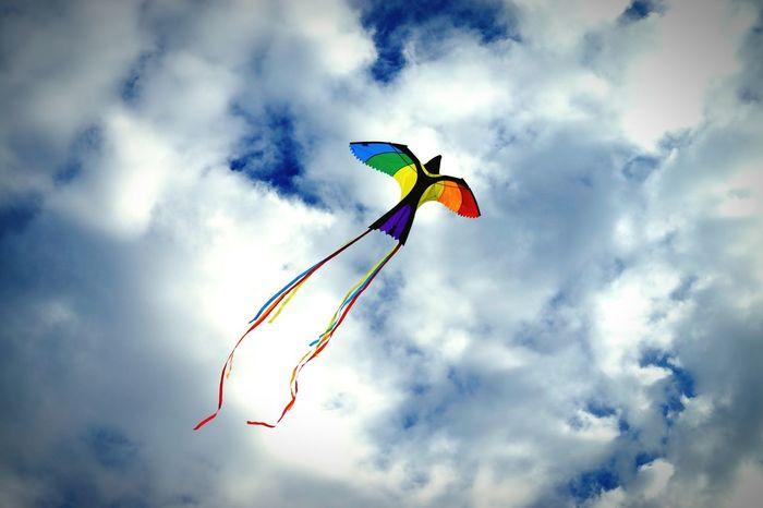 Kite Rainbow Sky Sky And Clouds Peace Rainbow Colors Rainbowflag Bird Dove Dove Of Peace