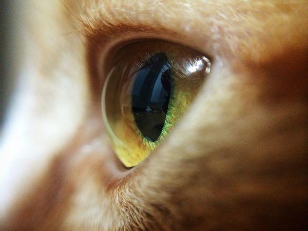 쉴때도 애기들을 관찰하는 카레 Curry Cat Cat Eye Cats Eyes