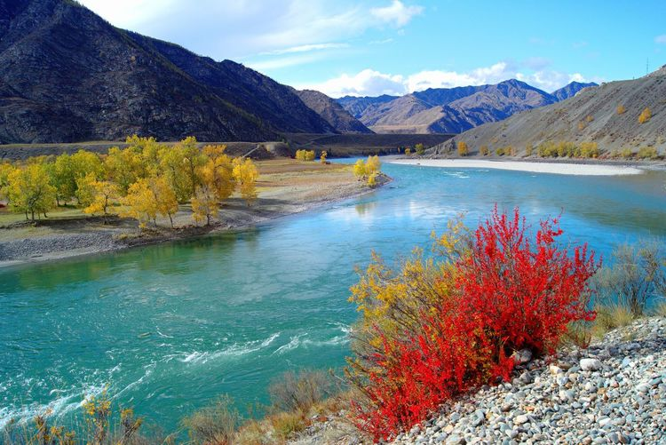 Katun river, Altay Turquoise Water Turquoise River Siberian Nature Barberry Altay Syberia Russia Landscape Landscape_photography Nature Nature Photography Autumn🍁🍁🍁 Autumn River Katun Water Flower Mountain Lake Sky Landscape Mountain Range My Best Photo
