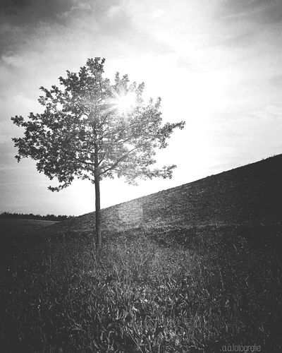 Tree Tranquil Scene Tranquility Sunlight Landscape Remote Nature Solitude Scenics Beauty In Nature Growth Sun EyeEm Nature Lover Field Day Non-urban Scene Outdoors Mountain Horizon Over Land No People EyeEm Gallery EyeEmBestPics Eye4photography