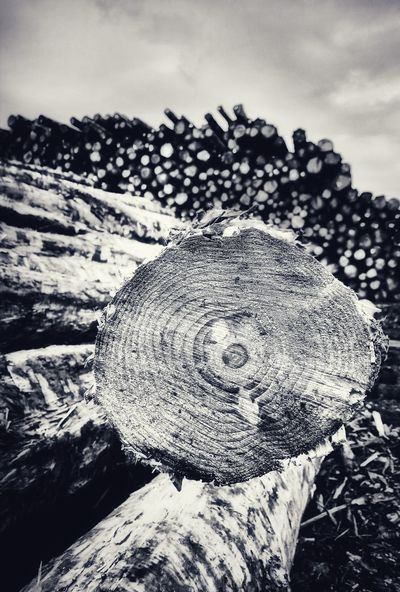 Log Pile Blackandwhite Black And White Black & White Blackandwhite Photography Black And White Photography Black&white Fineart_photobw Fineartphotography Monochrome Monochromatic Abstract Abstraction Abstracted Sombre Artphotography Wood Grain Patterns In Nature No People Outdoors Day Nature Landscape Sky Close-up