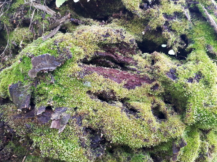 Interessante efeito no tronco de uma árvore. Full Frame Day Backgrounds No People Nature High Angle View Outdoors