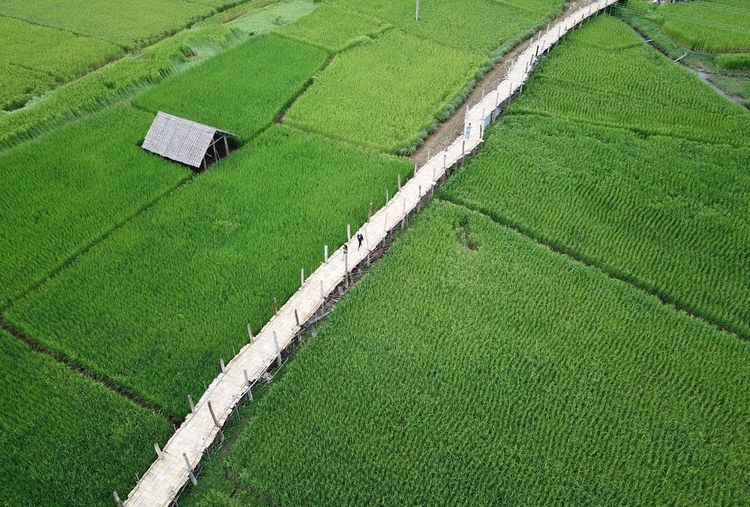 High angle view of footbridge amidst agricultural field