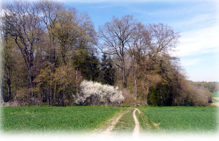 Edge Of The Wood Springtime