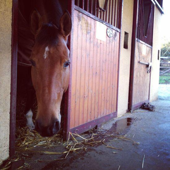 T'es peut être chiante et des fois un peu trop folle mais je t'aime bien! ?❤️ TOUPIE DE LA JOURLAIS.? La Plus Belle Bonheur Horse