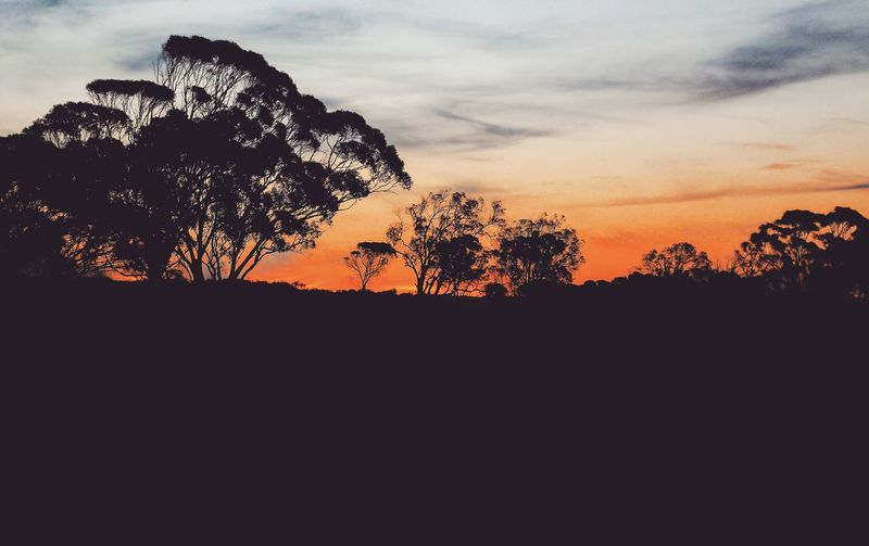 EyeEm Selects Tree Sunset Pixelated Silhouette Sky Cloud - Sky Close-up Countryside Tranquil Scene Tranquility Calm Idyllic Non-urban Scene Scenics